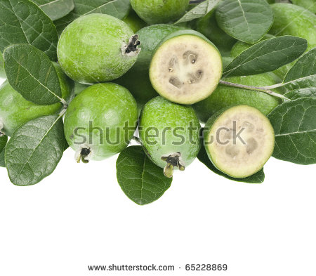 Feijoa Fruit Acca Sellowiana Leaves Close Stock Photo 40272856.