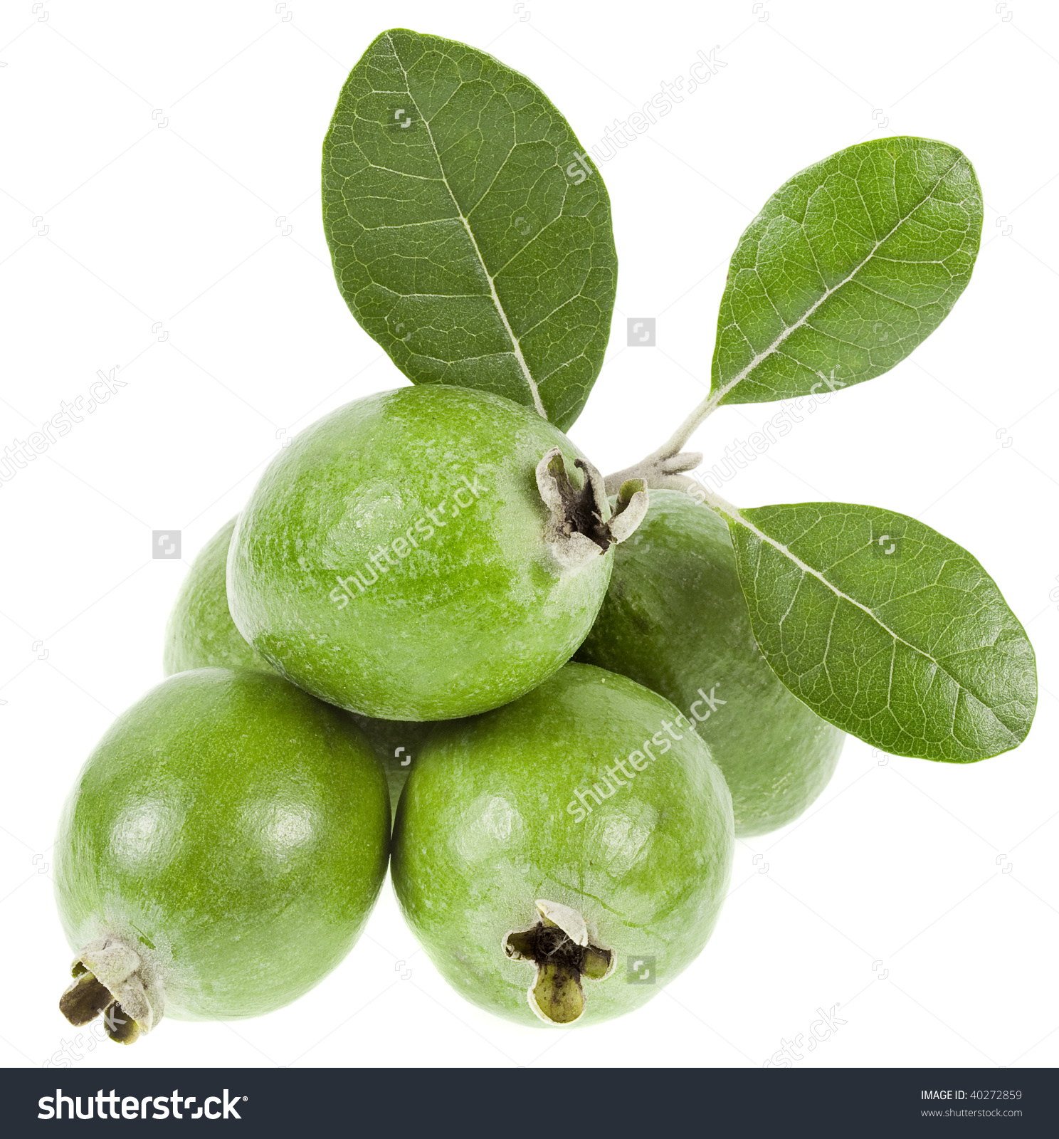 Feijoa Fruit Acca Sellowiana Leaves Heap Stock Photo 40272859.