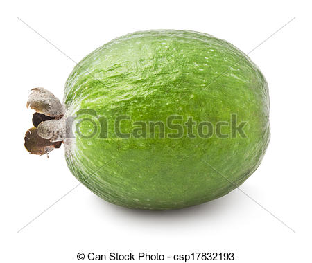 Stock Photographs of Feijoa fruit.