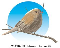 Accentor Clipart and Stock Illustrations. 3 accentor vector EPS.