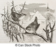 Accentor Clip Art and Stock Illustrations. 2 Accentor EPS.