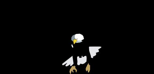 Haliaeetus leucocephalus (Bald Eagle).