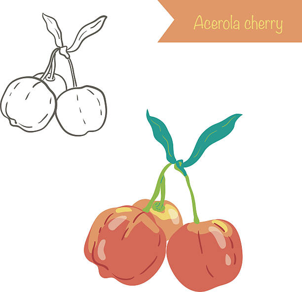 Acerola Clip Art, Vector Images & Illustrations.