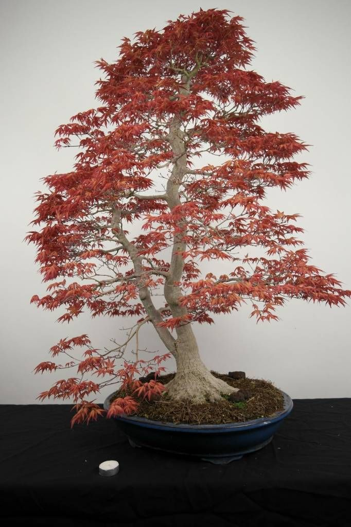 1000+ images about Bonsai, Ikebana, and Gardens on Pinterest.