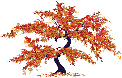 Acer Palmatum Clip Art, Vector Images & Illustrations.
