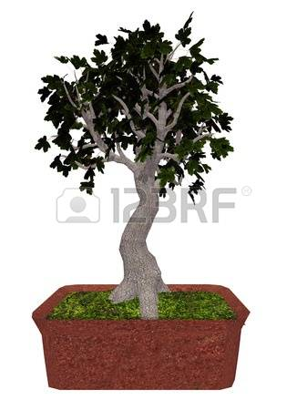 193 Acer Tree Stock Illustrations, Cliparts And Royalty Free Acer.