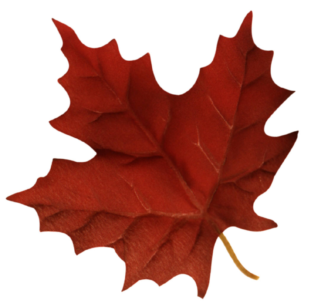 Maple Leaves Images.