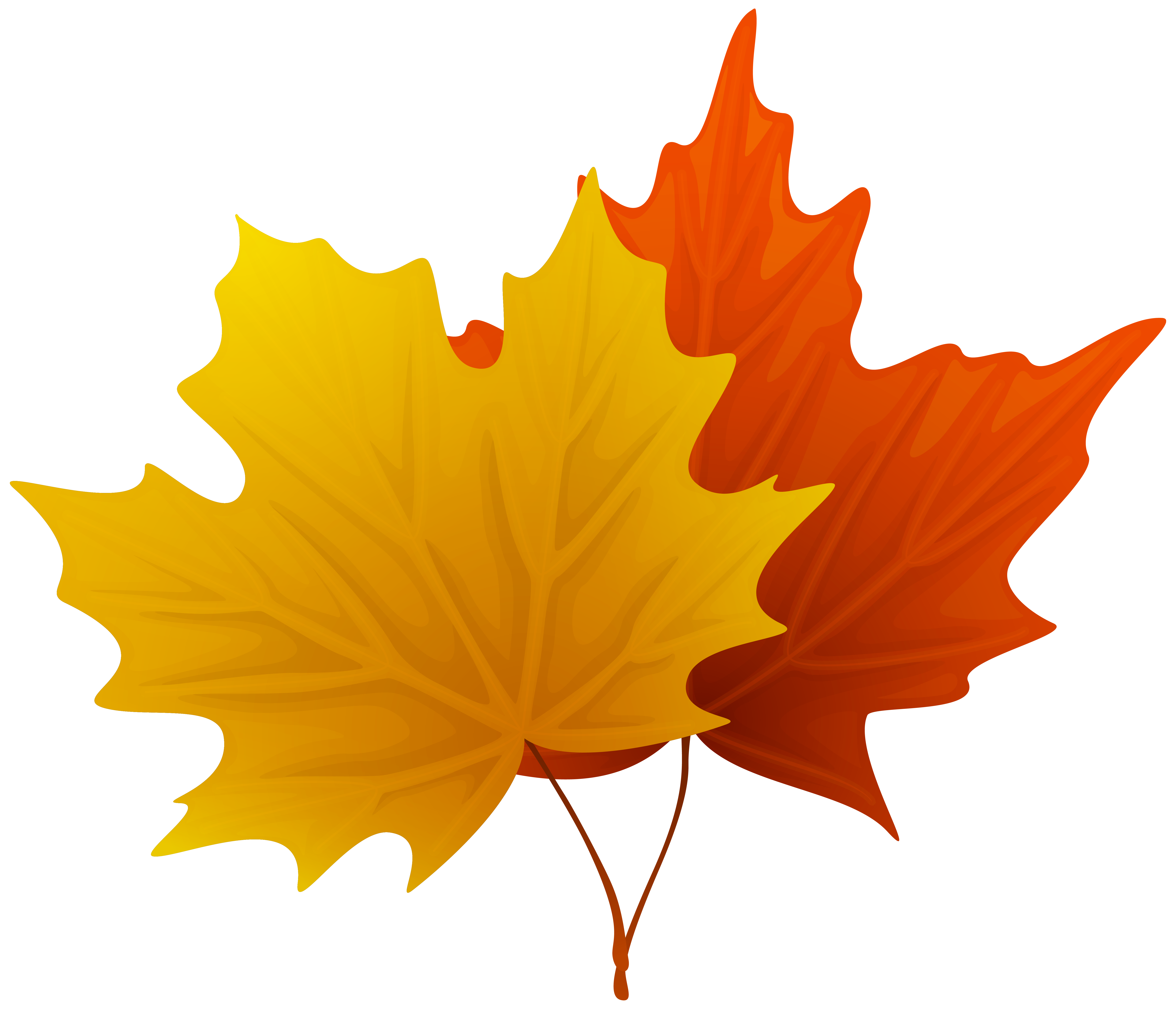 Acer leaves clipart - Clipground