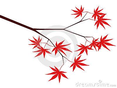 Japanese Maple Tree Stock Illustrations.