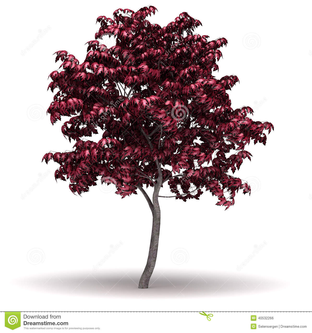Japanese Maple Tree Stock Illustrations.