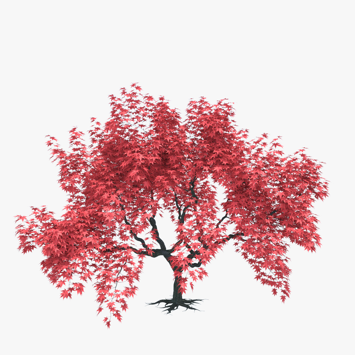 Searched 3d models for Japanese maple leaf (Acer palmatum).