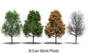 Stock Illustration of Acer pseudoplatanus (autumn).