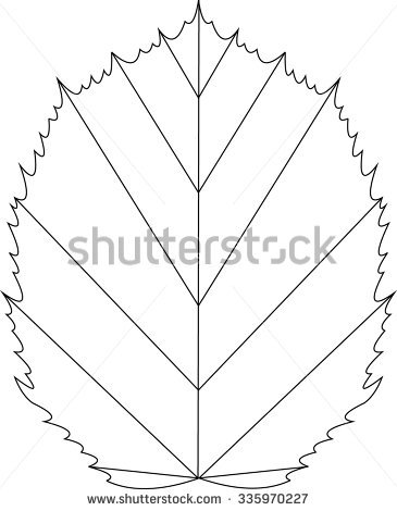 Leaf Of Acer Tataricum Stock Vector Illustration 335970227.