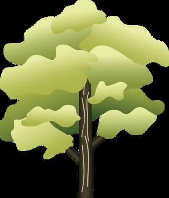 Acer pensylvanicum (Striped Maple).