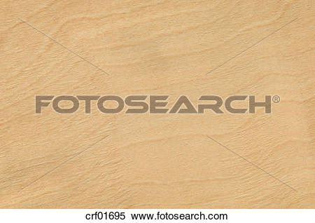 Stock Image of Wood surface, Maple Wood (Aceraceae) full frame.