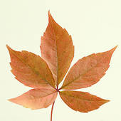Pictures of autumn.