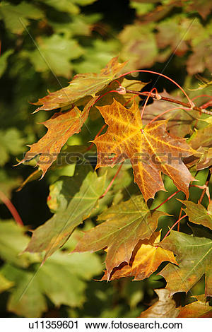 Stock Photography of autumn.