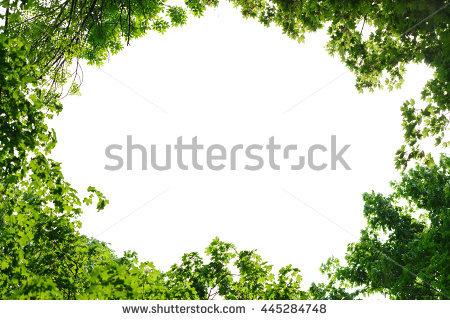 Aceraceae Stock Photos, Royalty.