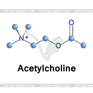 Acetylcholine.