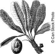 Achene Vector Clipart EPS Images. 8 Achene clip art vector.