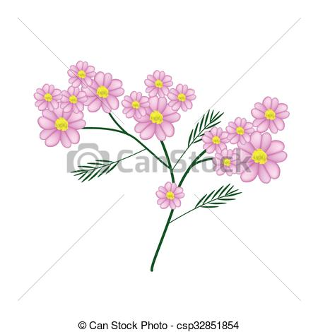 Clipart Vector of Blossoming of Pink Yarrow Flowers or Achillea.