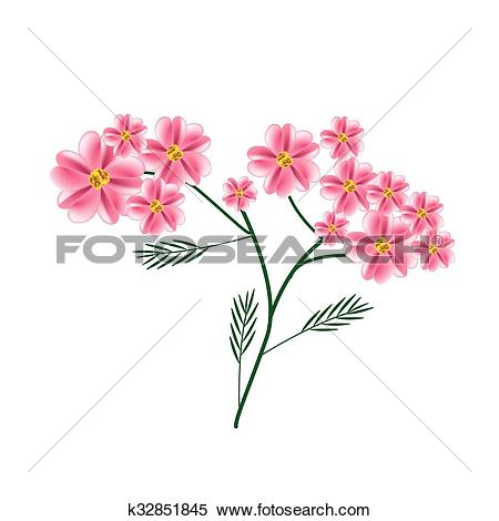 Clipart of Blossoming of Old Rose Yarrow Flowers or Achillea.