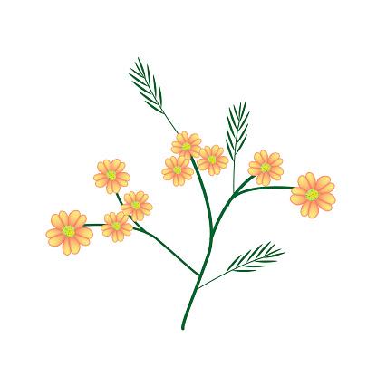 Achillea Millefolium Clip Art, Vector Images & Illustrations.