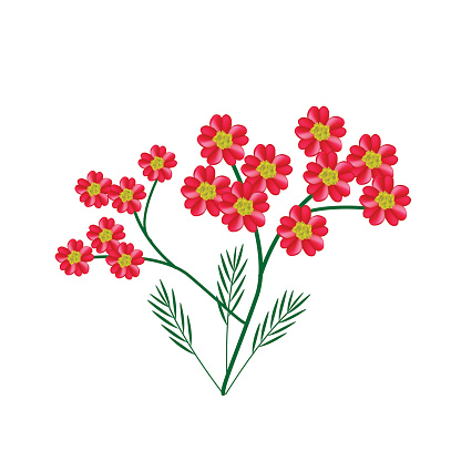 Achillea Millefolium Clip Art, Vector Images & Illustrations.