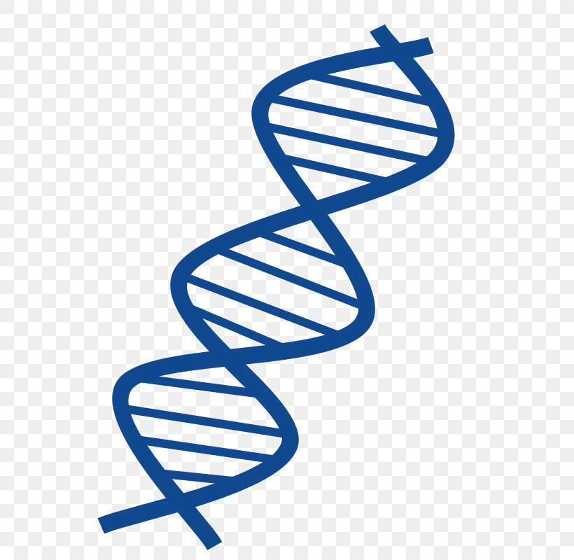DNA Nucleic Acid Double Helix Free Content Clip Art, PNG.