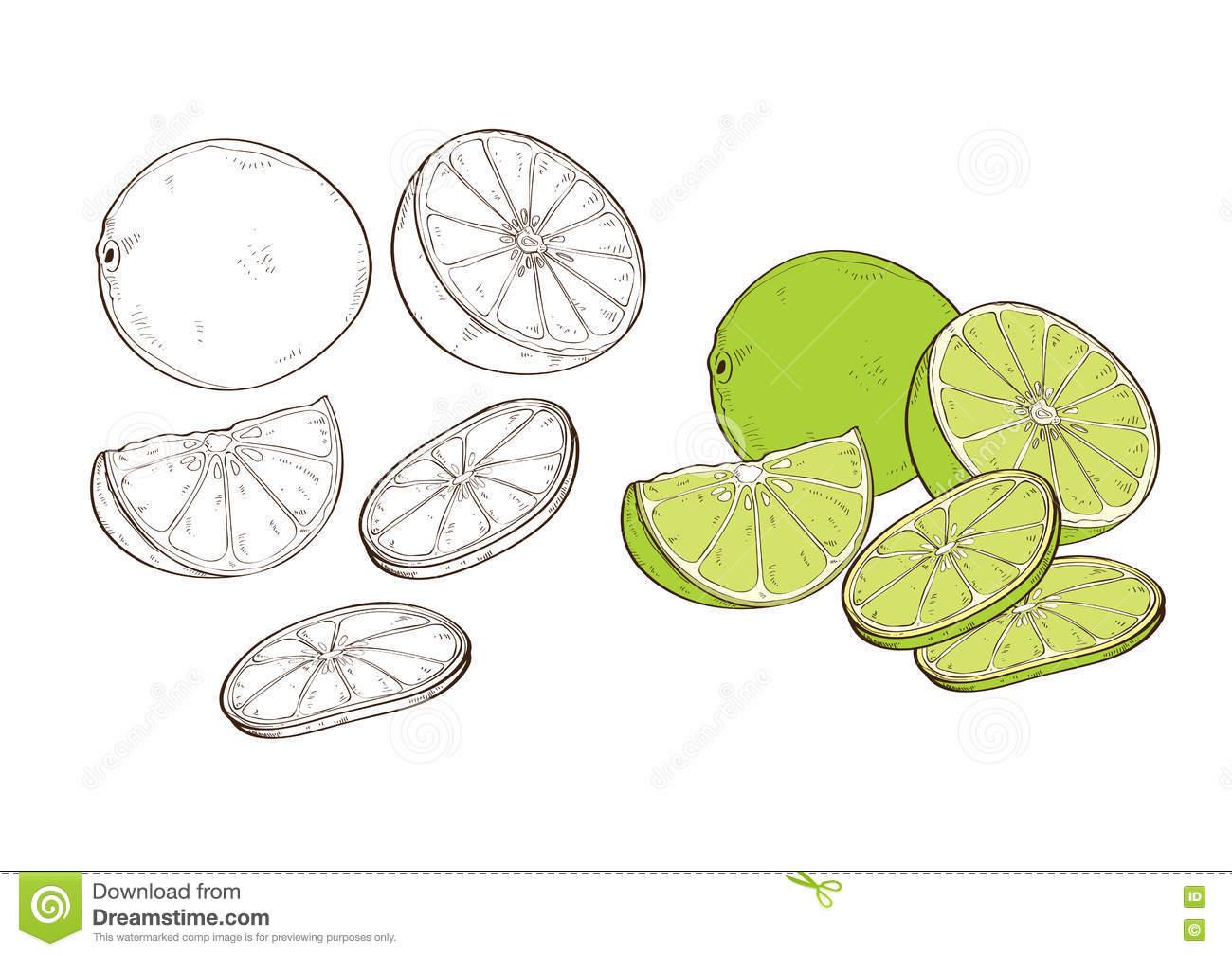 Lemon Vegetable Acidulous Tart Acid Taste Stock Vector.