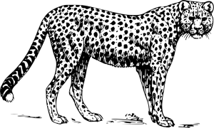 Cheetah Acinonyx Jubatus Clip Art Download.