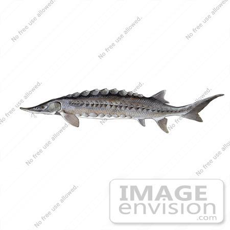 Vert Fishes Lab w/ pics.