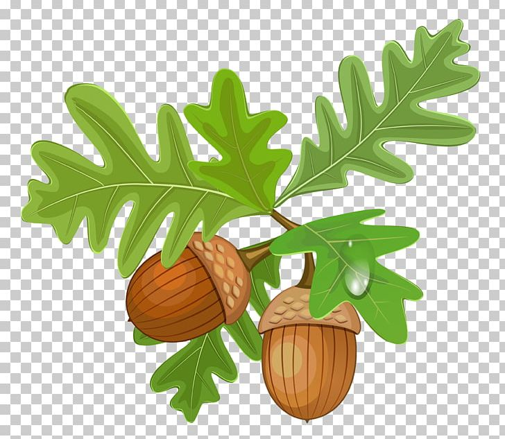 Acorn PNG, Clipart, Acorn, Acorns, Autumn, Clipart, Clip Art.