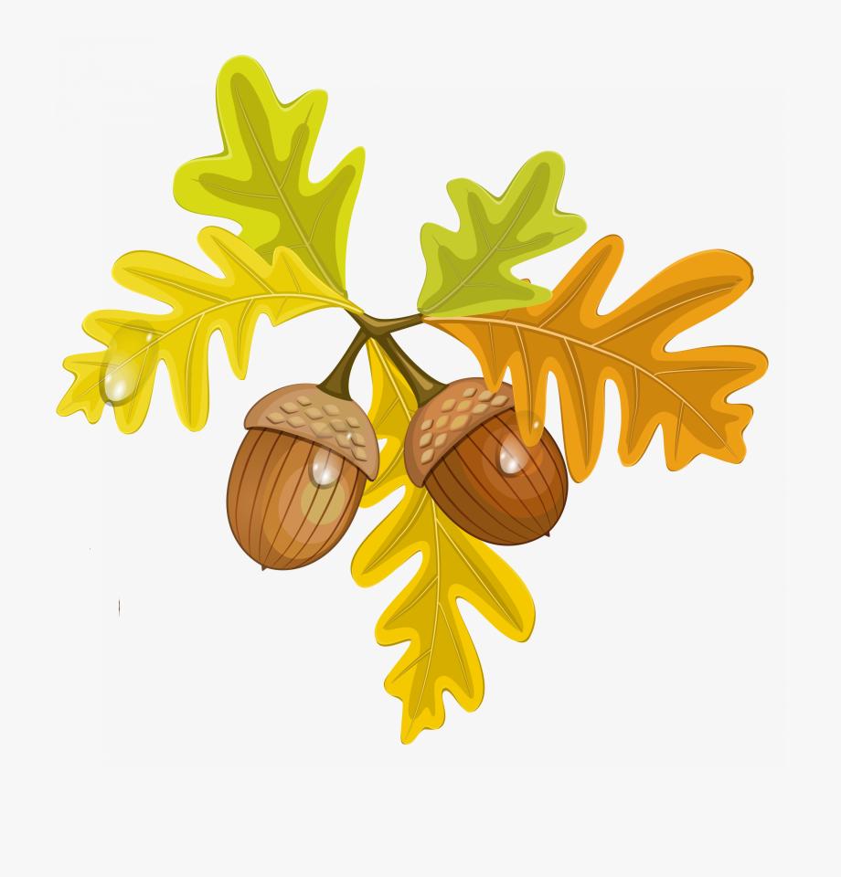 Maple Leaf Clipart Acorn.