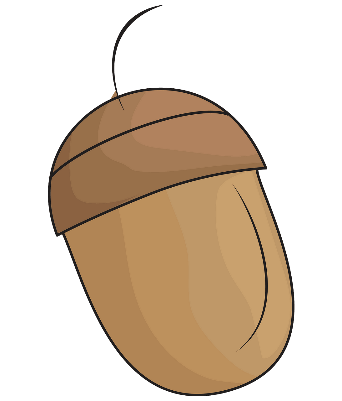 Acorn clipart. Free download..