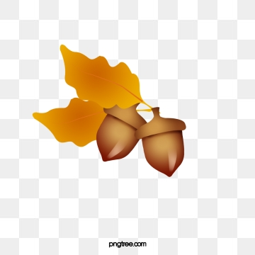 Acorn Png, Vector, PSD, and Clipart With Transparent Background for.