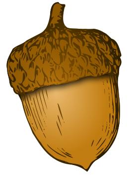 acorn clipart.