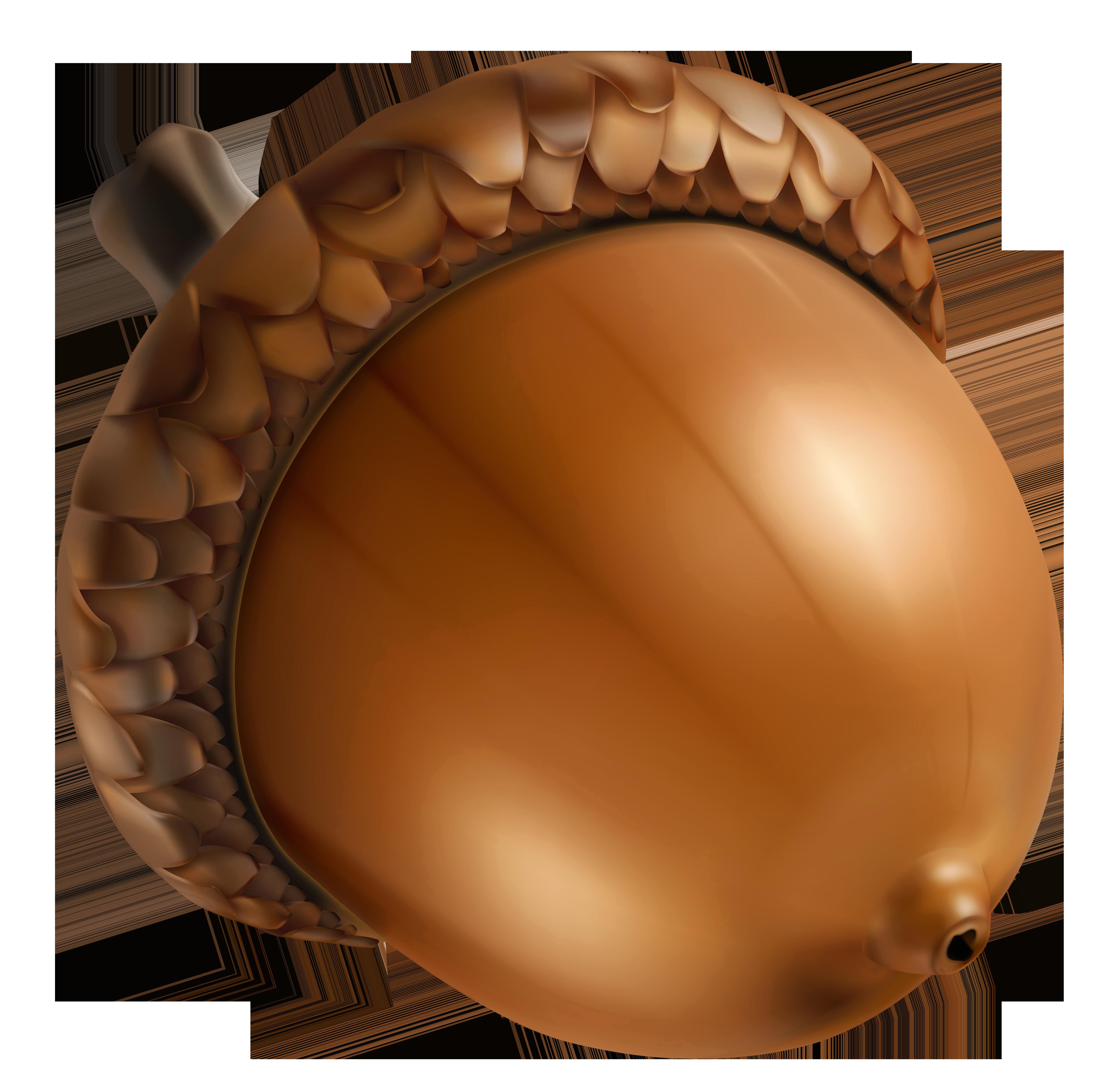 clipart acorn.