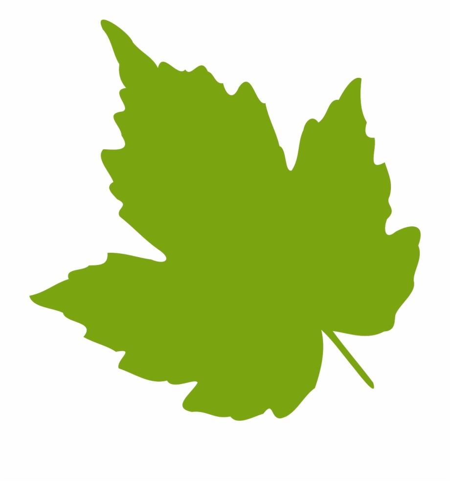 Oak Leaf Png.