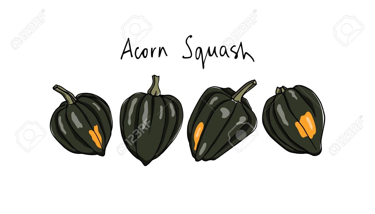 Hand drawn acorn squash..