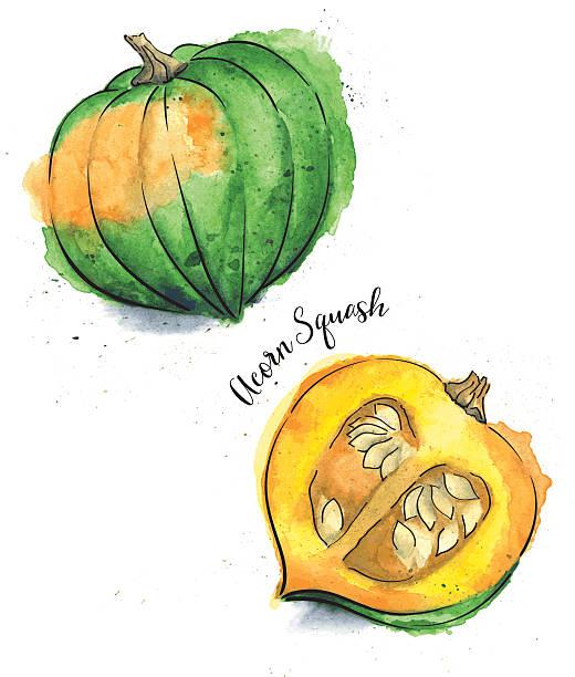 Best Acorn Squash Illustrations, Royalty.