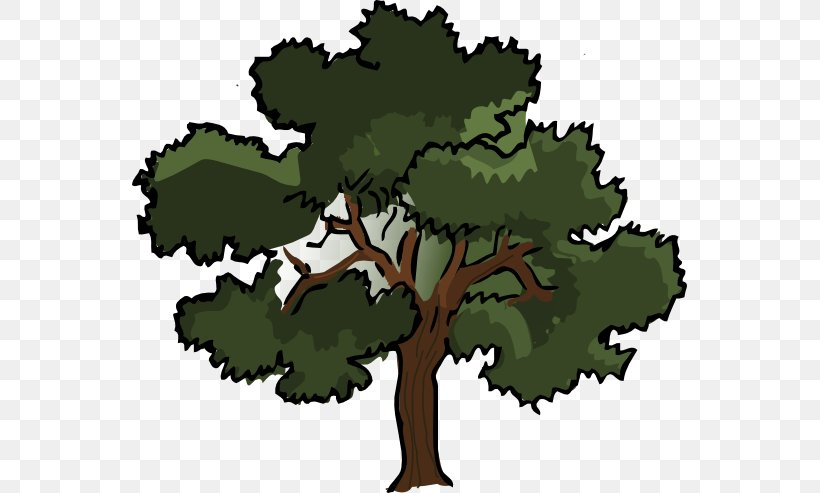 Southern Live Oak Tree Clip Art, PNG, 555x493px, Southern.