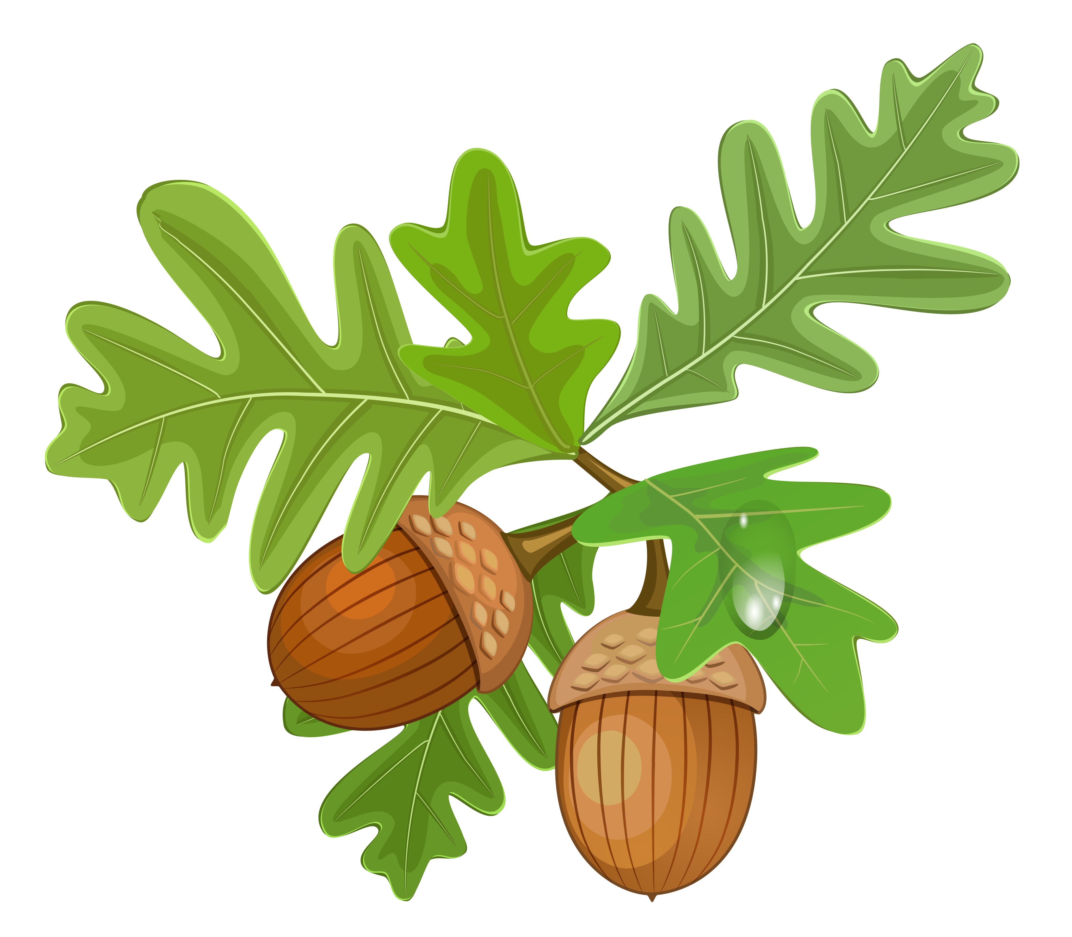 Transparent Leaves with Acorns.