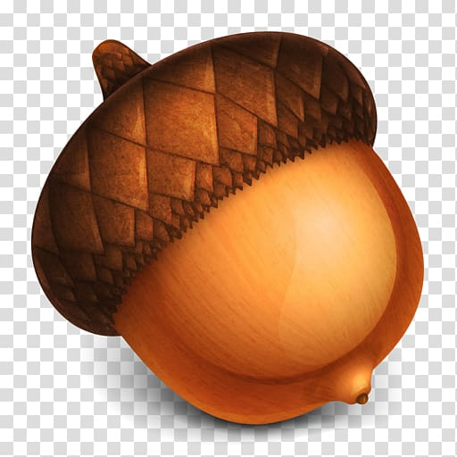 Acorn , Acorn , free, acorns transparent background PNG.