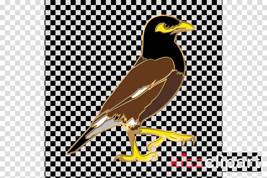 bird beak myna acridotheres common myna clipart.