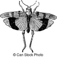 Acrididae Vector Clipart EPS Images. 20 Acrididae clip art vector.