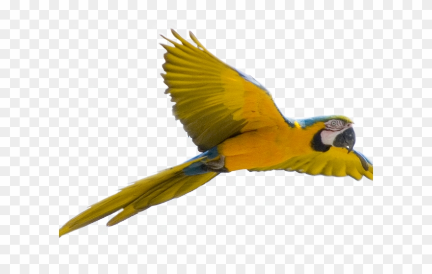 Parrot Clipart Face.
