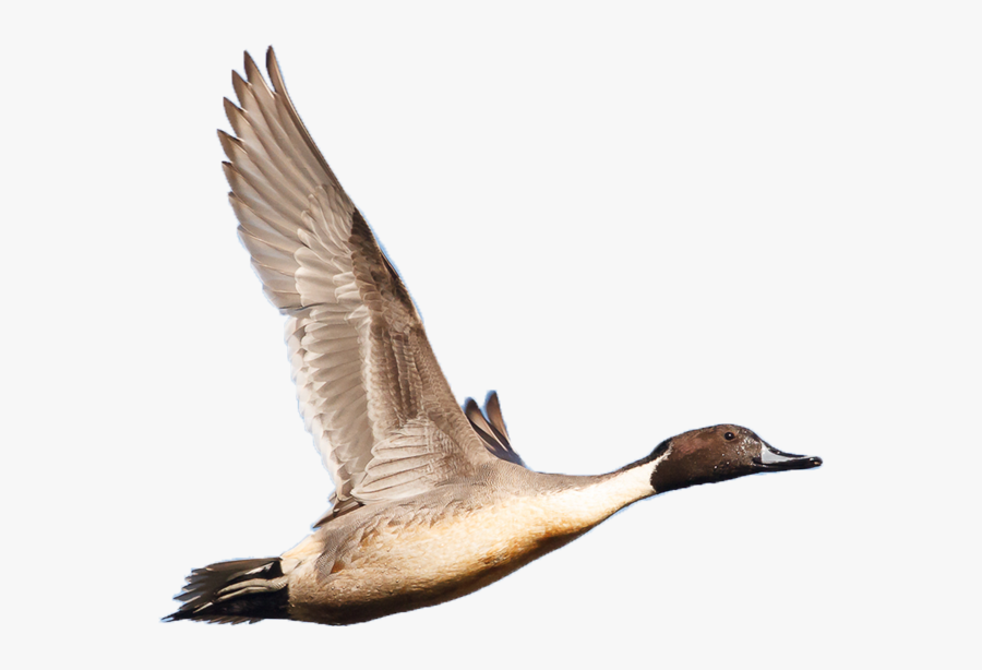 North American Wetlands Conservation Act.