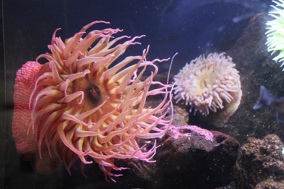 Sea, Anemones.