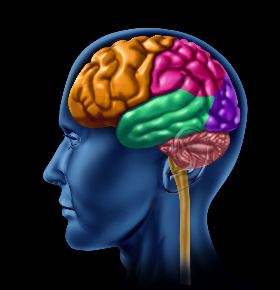 Active Brain Clipart.